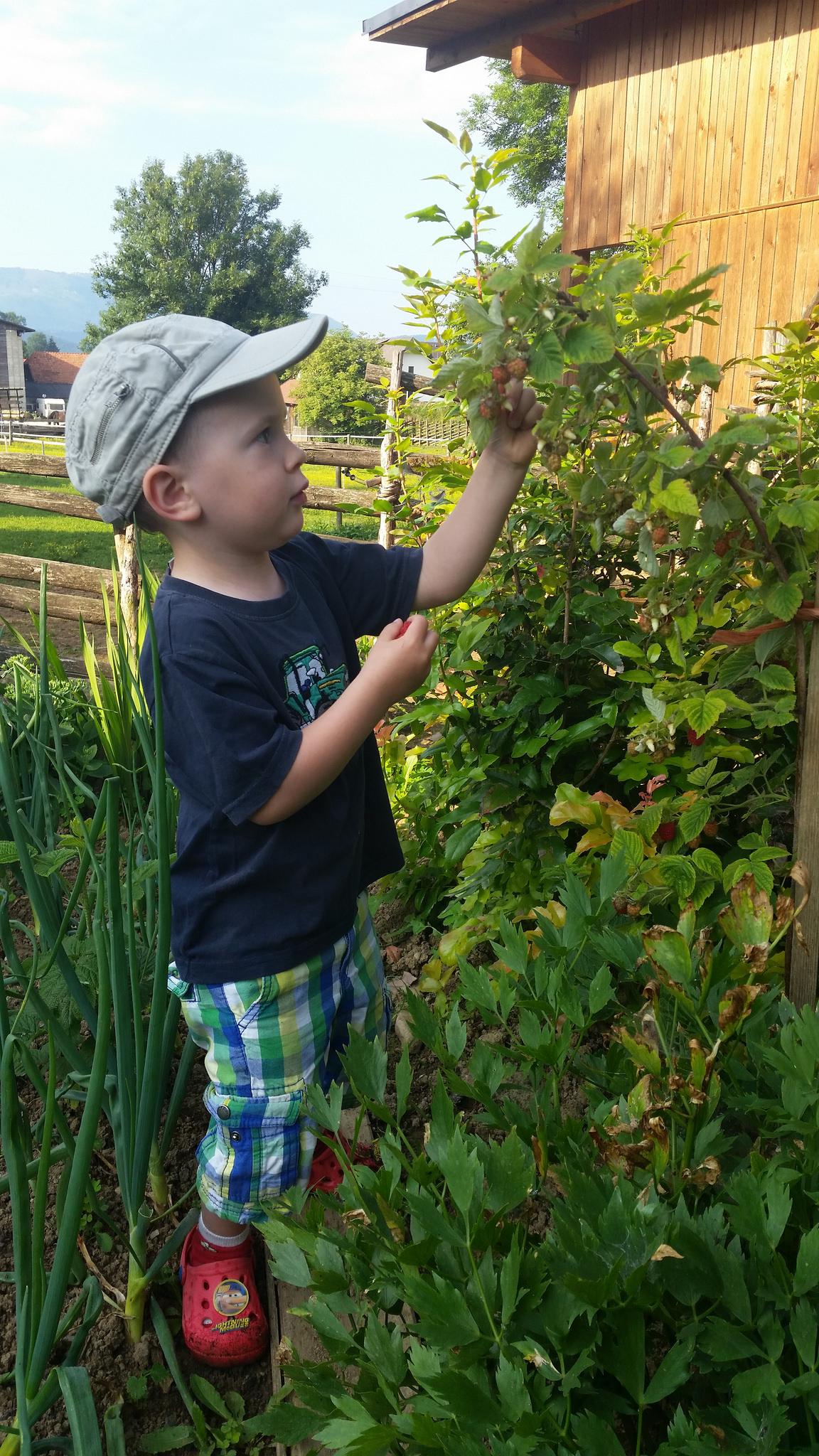 Clemens erntet im Garten