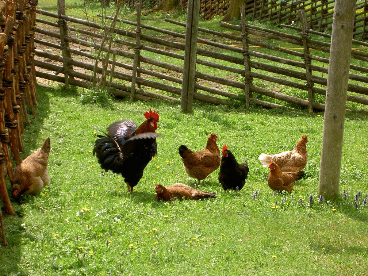 Bio Eier von Bio Hühnern