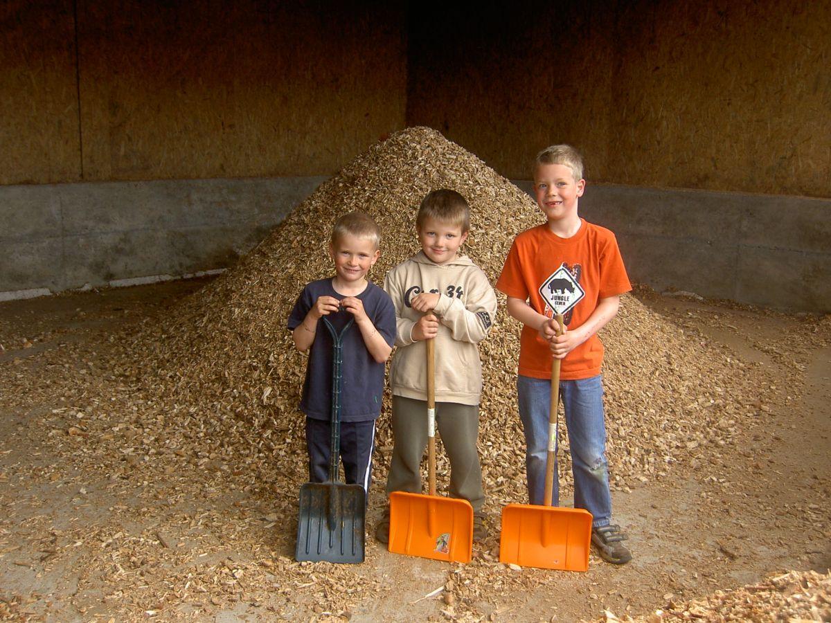 Biomasse aus dem Wald