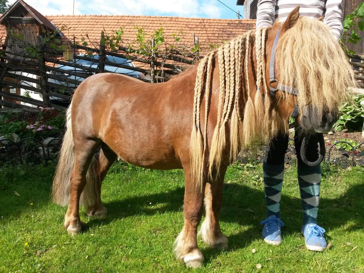 Haare flechten bei den Ponys