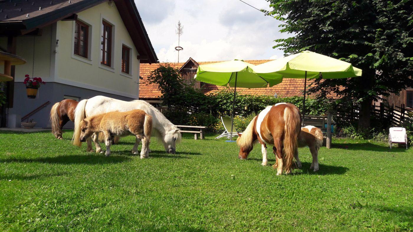 Glückliche Ponyfamilie