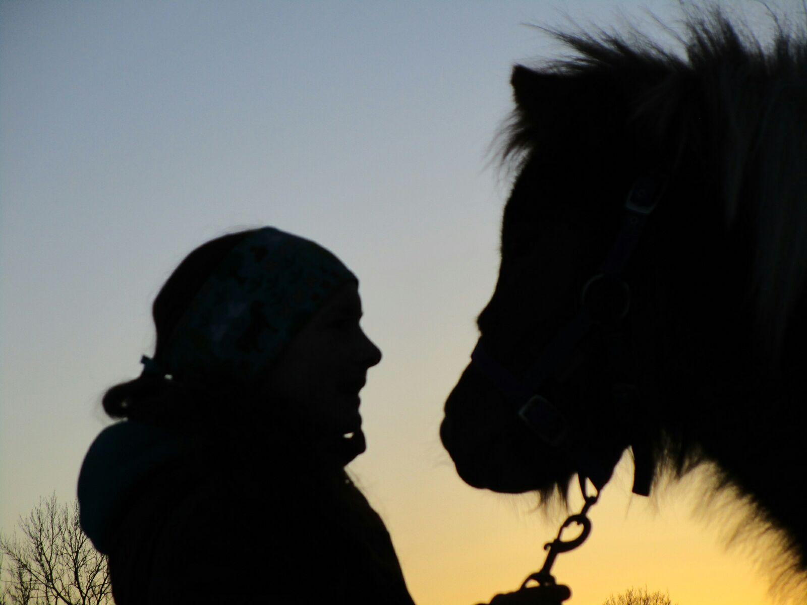 Kuschelpferde Ponies