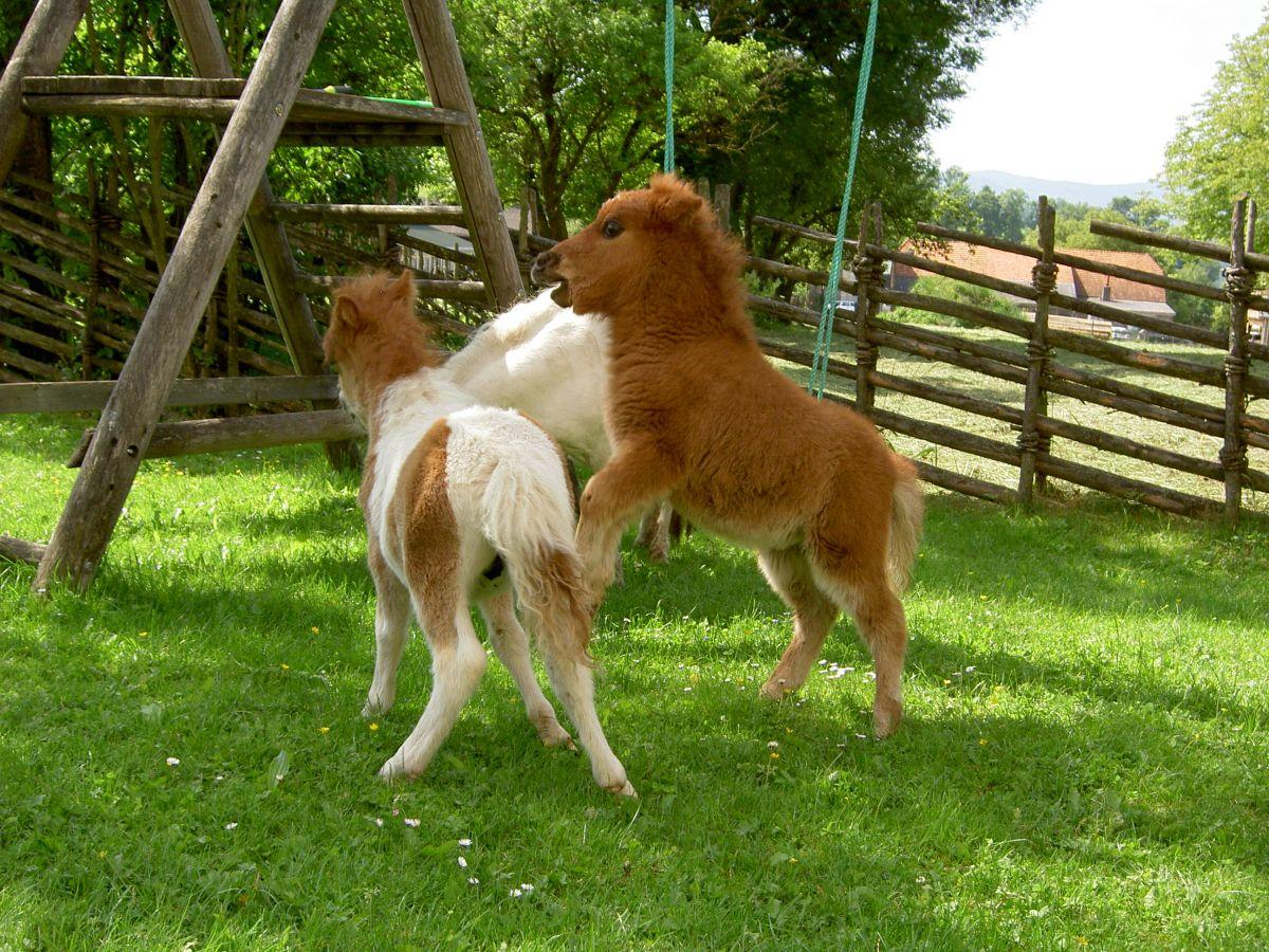 Ponykinder unter sich