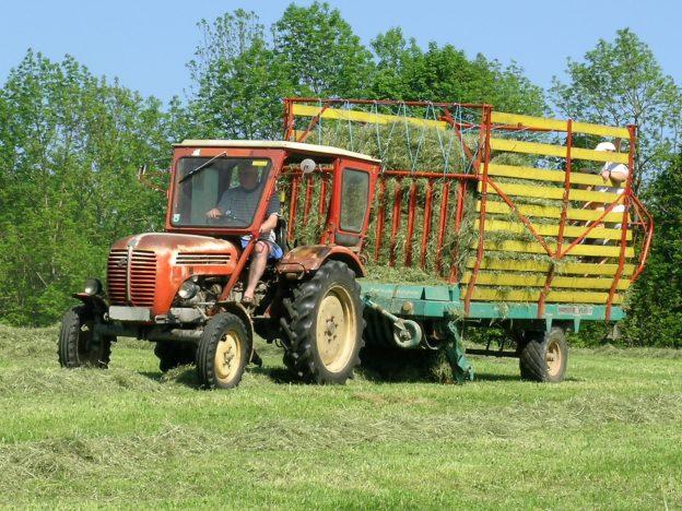 Urlaub am Bauernhof beim Miniponyhof Wild in der Steiermark, Österreich. Reiten, Pferde, Pony, Urlaub in Ferienwohnungen, Appartements, Ferienhaus, Almenland Camping, Campingplatz am Bauernhof