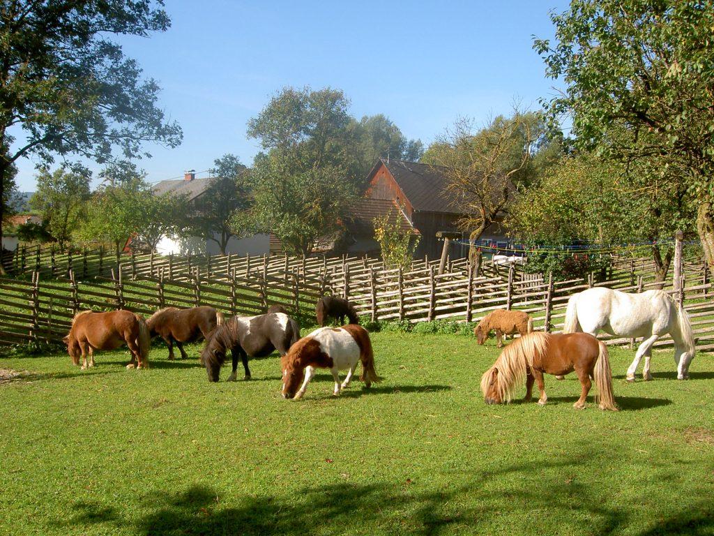 pferd und pony