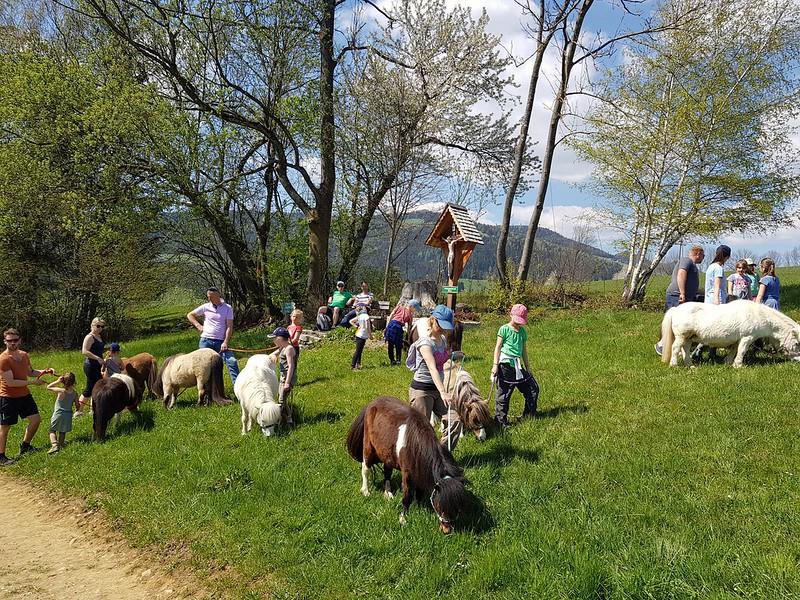Pony Wanderung Ostern am Miniponyhof